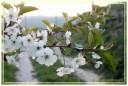 fiori00002