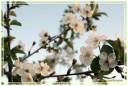 fiori00004