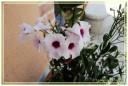 fiori00010