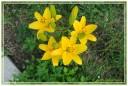 fiori00012