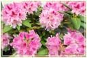 fiori00013