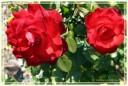 fiori00014