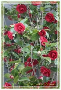 fiori00017