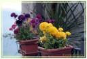 fiori00018