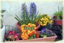 fiori00019