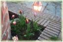 fiori00021